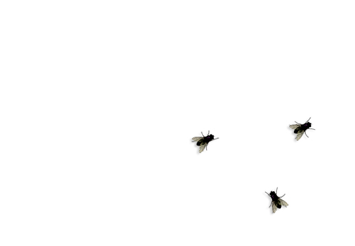 Fly on Desktop(桌面苍蝇软件) V1.3 绿色版